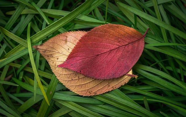 Leaves, Autumn, Plants, The Leaves, Leaf, Autumn Leaves