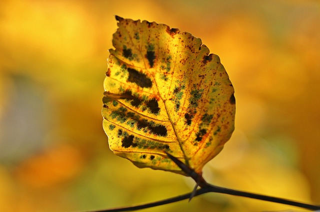 Autumn, Fall Foliage, Leaves, October, Colorful