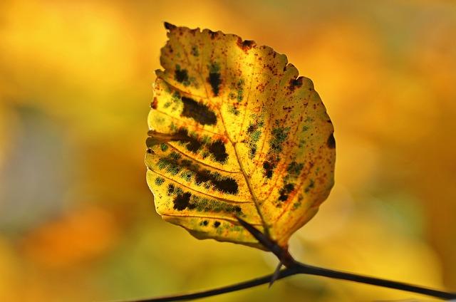 Autumn, Fall Foliage, Leaves, October, Colorful