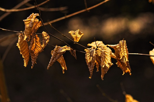 Branch, Leaf, Foliage, Dry, Autumn Leaves, Dead