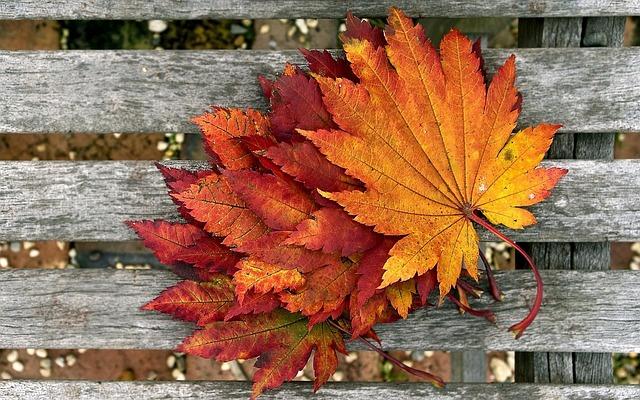Foliage, Autumn, Dry Leaves, Color, Autumn Leaves