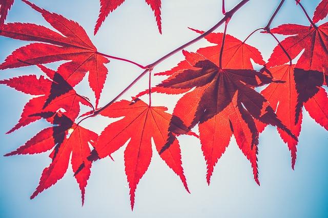 Autumn Leaves, Beautiful, Close-up, Leaves