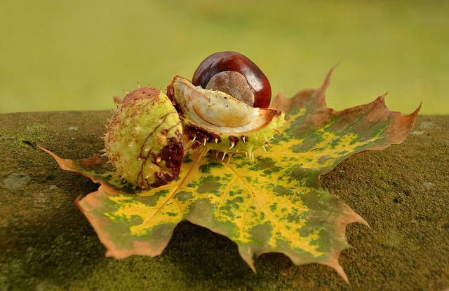 Chestnut, Autumn, Golden October, Leaves, Spur, Shell