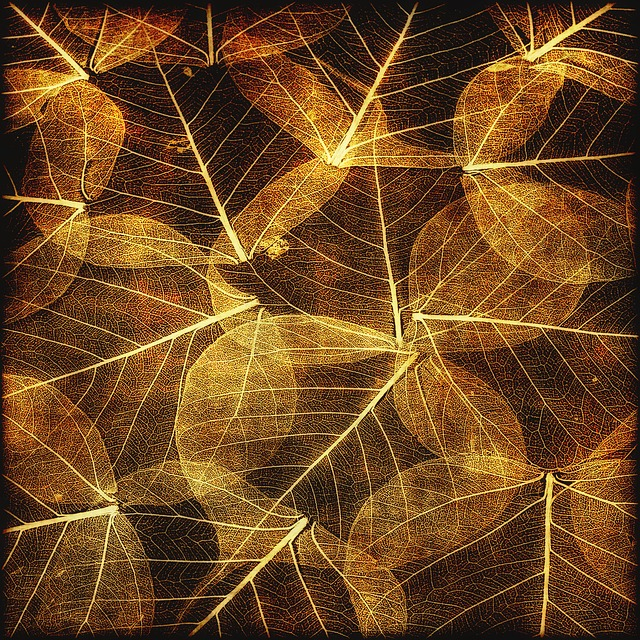 Leaves, Autumn, Texture, Brown