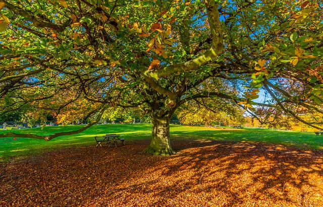 Autumn Leaves, Desktop Wallpaper, Yorkshire, Shadow