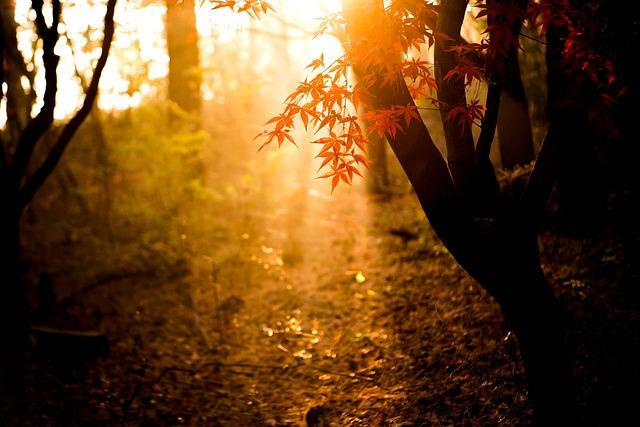 Autumn, Light, Autumn Leaves, Park, The Morning Sun