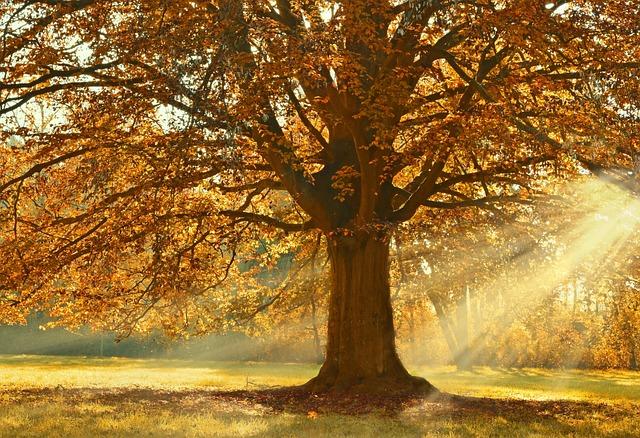 Tree, Deciduous Tree, Linde, Linden, Autumn
