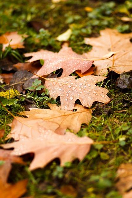 Sheet, Autumn, Listopad, Drops, Rain, Autumn Nature
