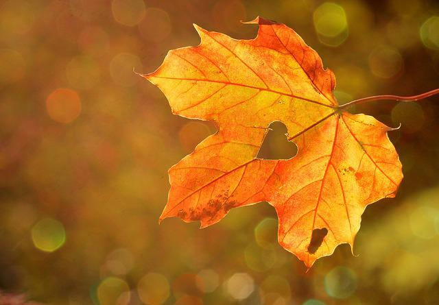Heart, Sweetheart, Leaf, Autumn, Maple, Bokeh, Nature