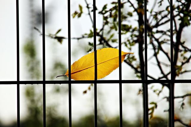 Leaf, Fence, Grid, Autumn, Colorful Leaf, Metal, Iron