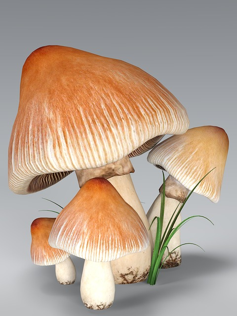 Mushroom, Forest, Nature, Autumn, Moist, Macro, Brown