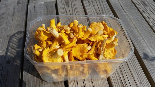 Chanterelle Mushrooms, Sponge Basket, Autumn Mushrooms