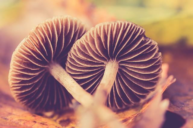Autumn, Mushroom, Nature, Forest, Fall Colors