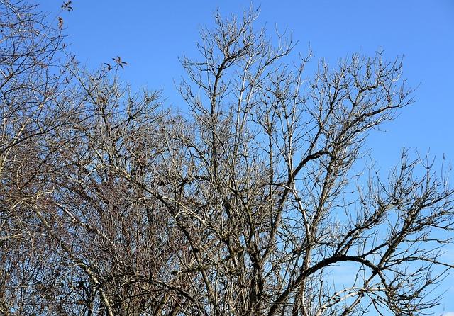 Autumn, Tree, Kahl, Blätterlos, November