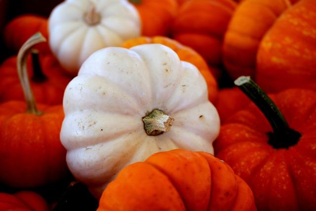 Pumpkin, Halloween, Autumn, Orange, October, White