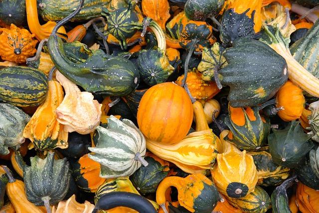 Pumpkins, Decorative Squashes, Green, Autumn, Orange