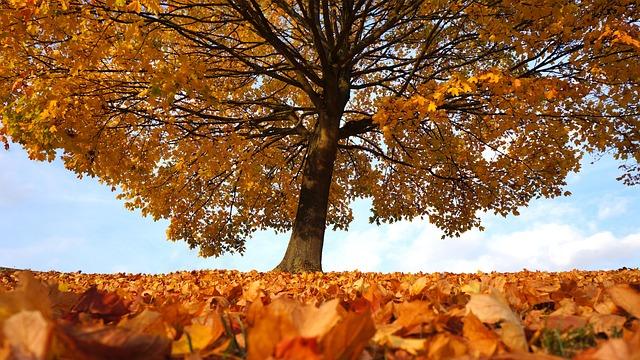 Autumn, Tree, Fall, Landscape, Park, Forest, Nature