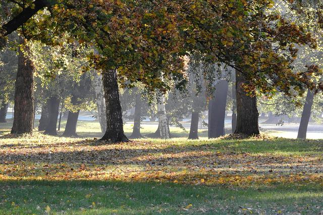 The Trees In The Fall, Autumn Park, Autumn In The Park