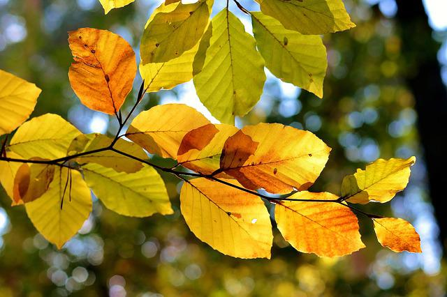 Leaf, Nature, Autumn, Plant, Tree