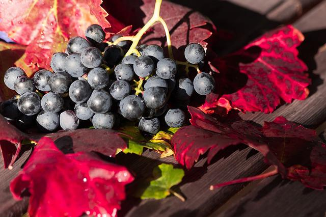 Wine, Grape, Leaf, Wine Harvest, Plant, Autumn