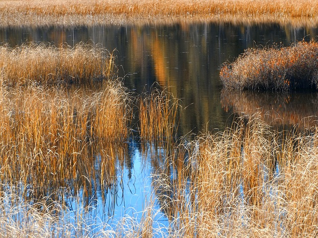 Autumn, Grasses, Reflections, Pond, October, Nature