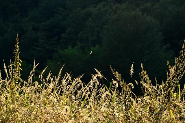 Sunshine, Reed, Pool, Autumn, Nature, Landscape