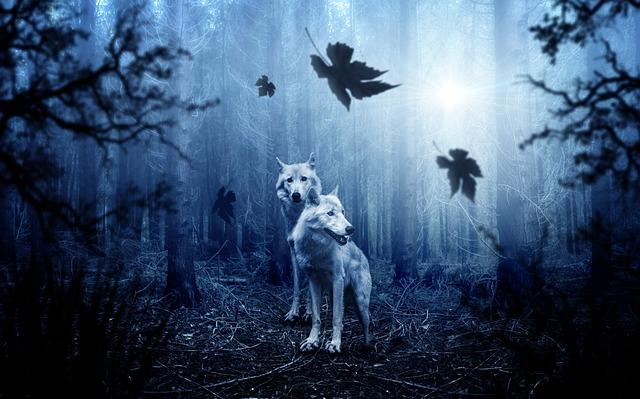 Wolf, Forest, Autumn, Dark, Predator, Nature, Animal