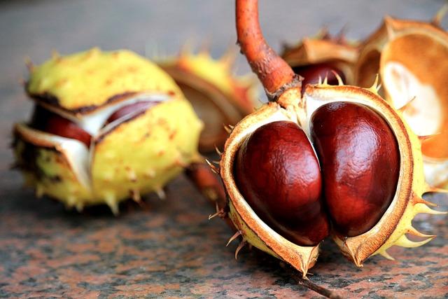 Chestnut, Autumn, Prickly, Spur, Brown