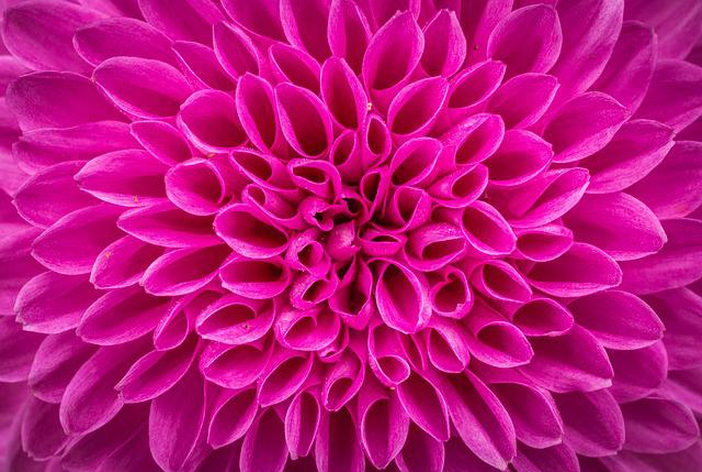 Flowers, Nature, Plants, Autumn, Affix, Macro, Purple