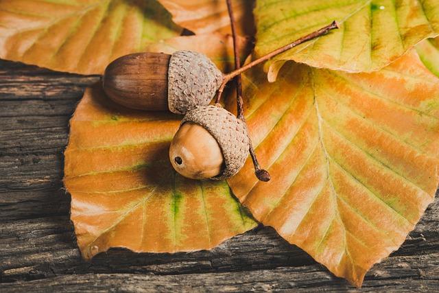Acorns, Leaves, Foliage, Season, Autumn, Autumn Season
