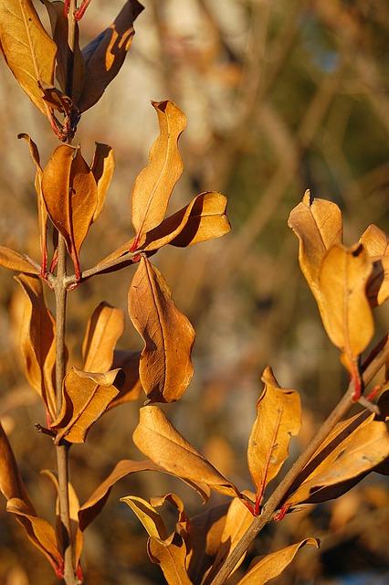 Autumn, The Leaves, Shriveled, Dead Leaves, Leaf