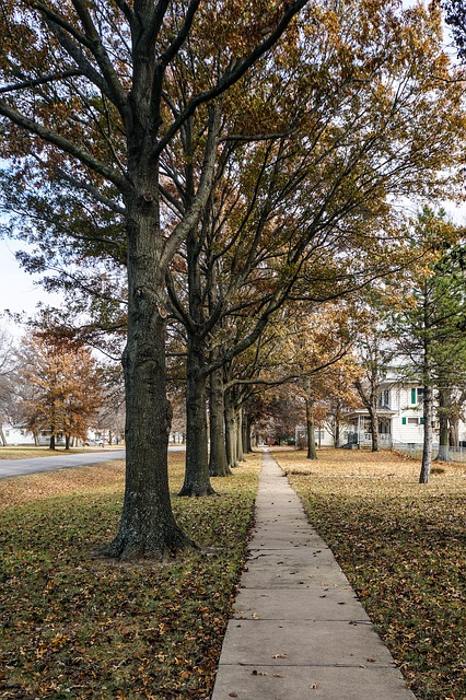 Sidewalk, Fall, Autumn, Small Town, Trees, Line, Path