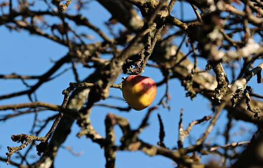 Apple, Apple Tree, Autumn, Autumn Sun, Blue Sky