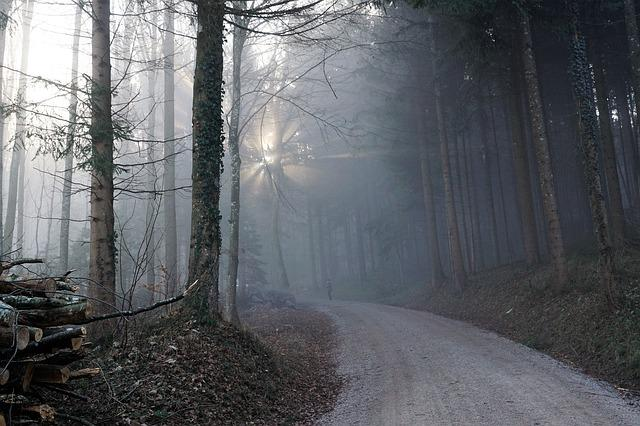 Forest, Fog, Sun, Nature, Trees, Winter, Autumn, Mood