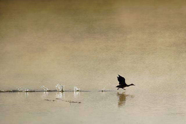 Morning, Fog, Bird, Hay, Autumn, Sunrise, Landscape