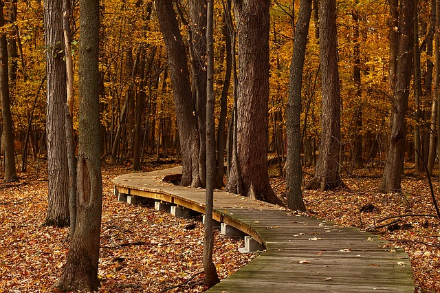 Fall, Forest, Leaves, Trail, Foliage, Autumn, Nature