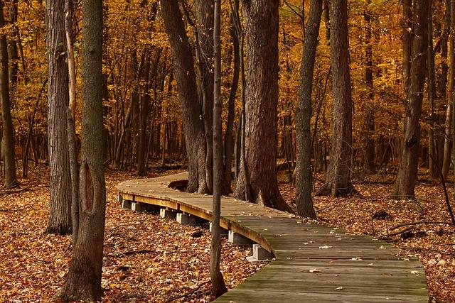 Fall, Forest, Leaves, Trail, Foliage, Autumn, Nature