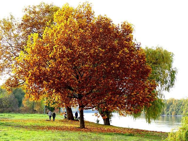 Tree, Autumn, River, Rhine