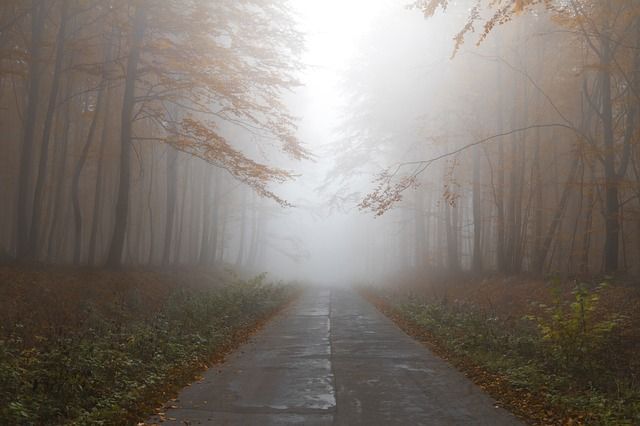 Autumn, Forest, Mist, Path, Trees