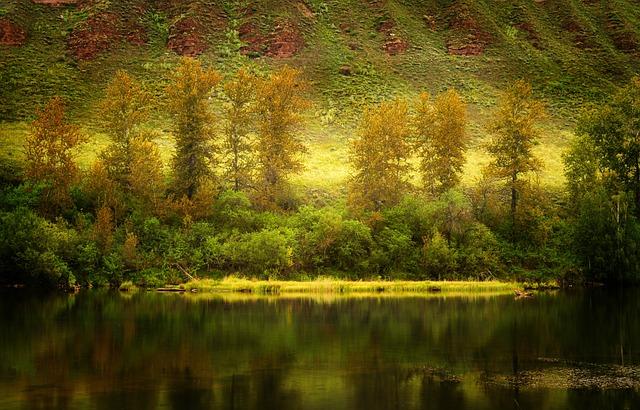 Autumn, Landscape, Nature, Forest, River, Trees, Golden