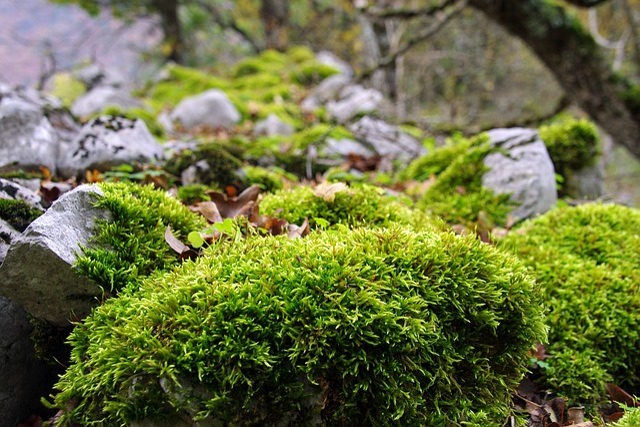 Forest, Underwood, Moss, Autumn