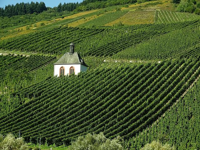 Vineyard, Wine, Landscape, Mosel, Winegrowing, Autumn