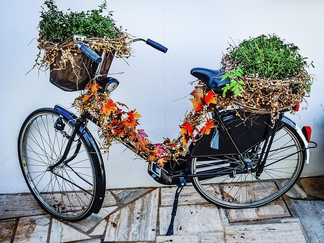 Bicycle, Vine, Herbal, Basket, Bike, Vintage, Autumn
