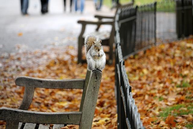 Bench, Animal, Park, Leaves, Autumn, Wild, Chipmunk
