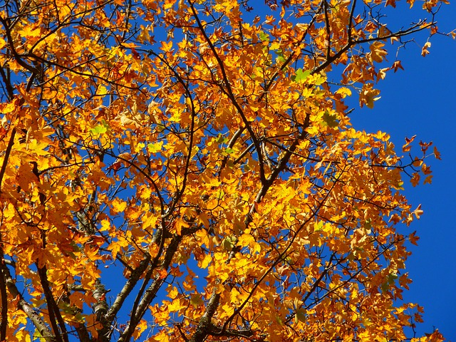 Autumn, Colorful, Tree, Leaves, Yellow