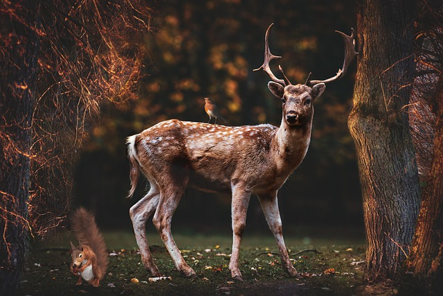 Forest, Animals, Fallow Deer, Ave, Squirrel, Trees