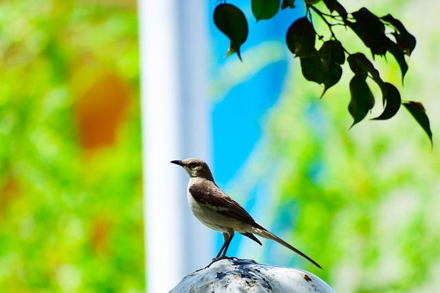Birds, Nightingale, Ave, Fauna, Tail, Silhouette, Green