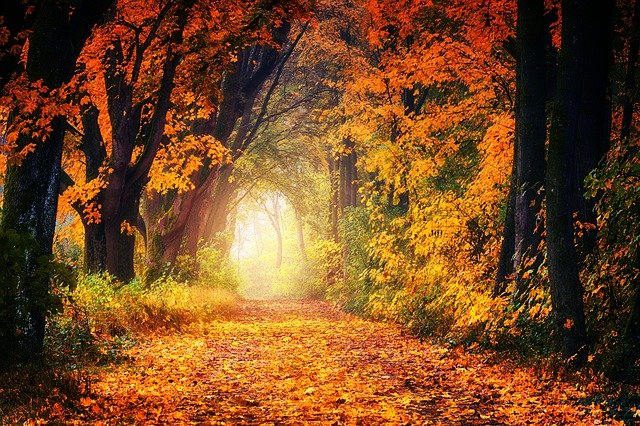 Autumn, Avenue, Away, Leaves, Tree, Nature, Forest