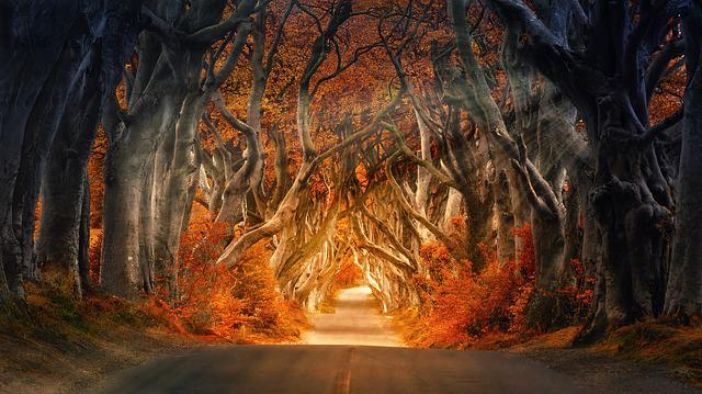 The Dark Hedges, Armoy, Ireland, Road, Avenue, Forest