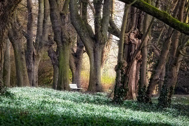 Park, Trees, Forest, Avenue, Bank, Beech, Book, Spring
